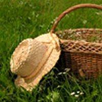 Grass Patch Fragrance Oil