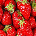 Strawberry Fields Forever Fragrance Oil
