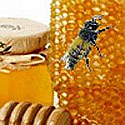 Bee My Honey Fragrance Oil